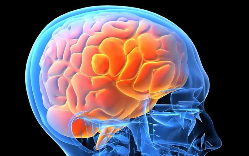 ادم مغزی برخاسته از ارتفاع